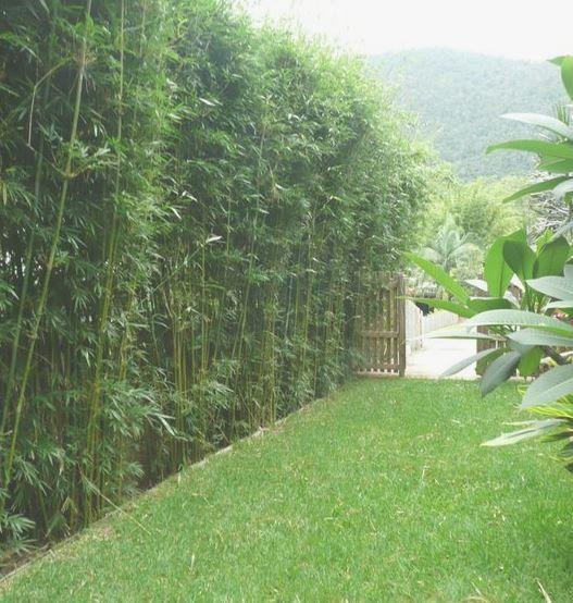 ต้นไม้แต่งรั้วบ้าน สวยๆ